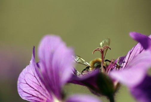 Plant, Flower, Macro, Purple, Close, Nature, Blossom