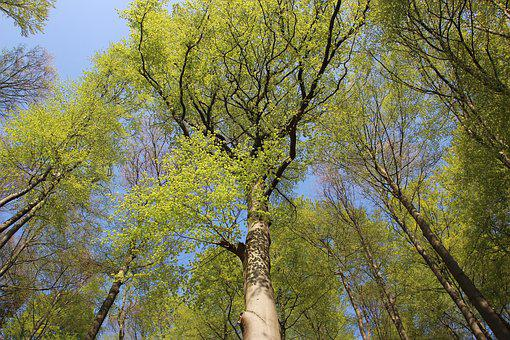 Sky, Trees, Blue, Spring, Forest, Live New
