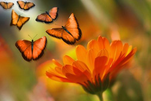 Butterfly, Insect, Animal, Flowers, Marguerite, Summer