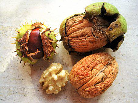 Chestnut, Walnuts, In The Bowl, Autumn Fruits, Autumn
