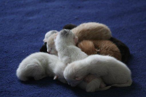 Cat, Domestic Cats, Ekh, Kitten, Baby Kitten, Baby Cats