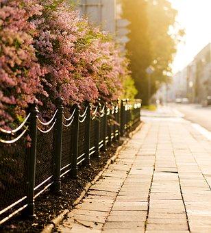 Flowering Shrubs, Pavement, City, Street, Paving