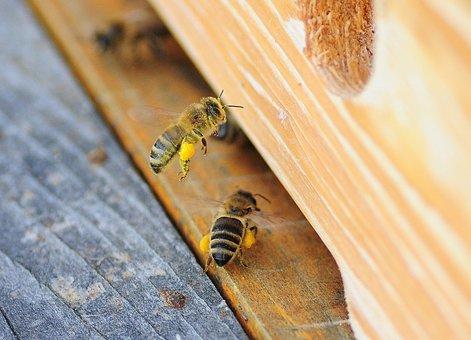 Always, Bee, Macro, Honey, Pollen, Nectar, Spring