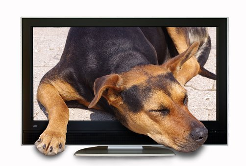 Photomontage, Composing, Dog, Tv, Screen, Hybrid