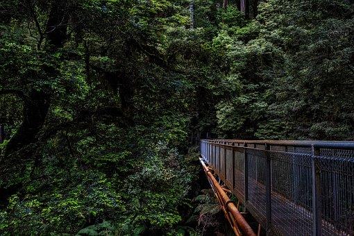 Australia, Landscape, Forest, Trees, Woods, Jungle