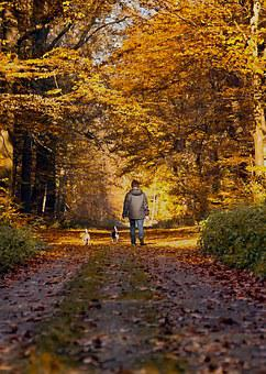 Forest Path, Autumn, Walkers, Dog, Fall Leaves, Mood