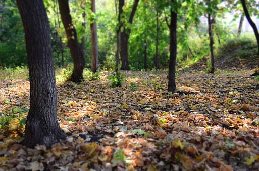 Forest, Nature, Trees, Landscape, Fringe, Summer