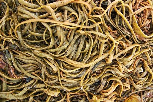 Seaweed, Sea, Weed, Ribbon, Marine, Shore, Seashore