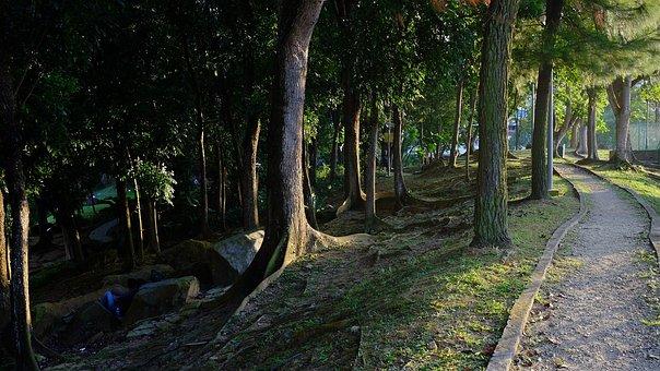 Forest, Trees, Rocks, Stones, Trunk, Bark, Wood