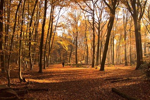 Forest, Walkers, Wanderer, Fog, Sunlight, Autumn