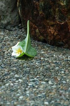 Jasmine Flower, Sidewalk, Rain, Wet, Pebble, Paving