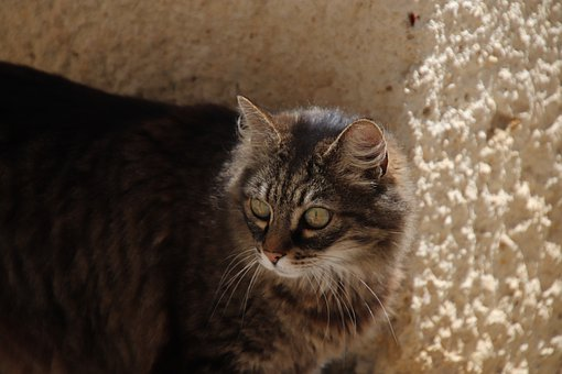 Cats, Felines, Animals, Familiar, Cute, Adorable, Fur