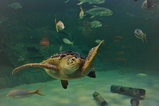 Aquarium, Sea Turtle, Underwater, Animal, Nature