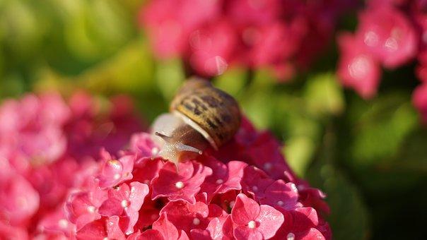 Snail, Animal, Shell, Probe, Mucus, Animal Portrait
