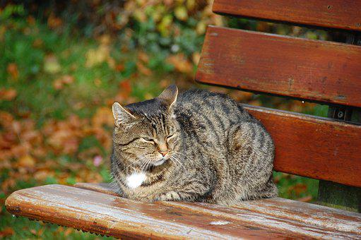 Cat, Bank, Sitting, Autumn, Animal, Break, Rest