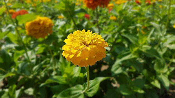 Gorgeous, Bright, Nature, Bloom, Summer, Flower, Petals