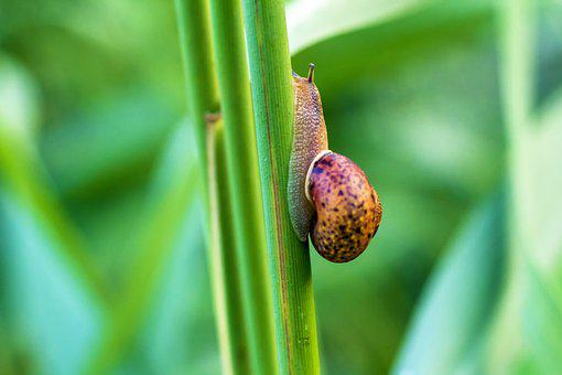 Snail, Green, Crawling, Insect, Plant, Macro, Up