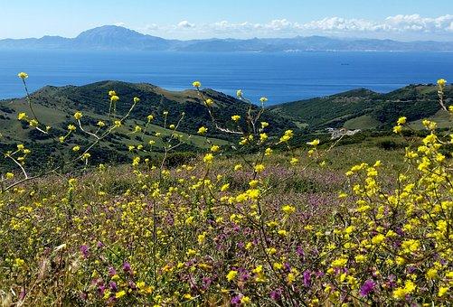 Landscape, Summer, Nature, Sky, Field, Blue, Meadow