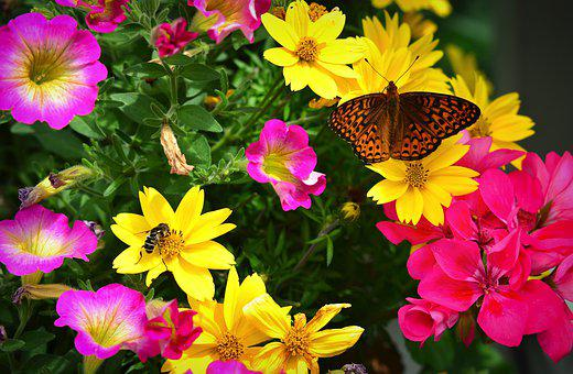 Flowers, Butterfly, Insects, Nature, Wings, Summer