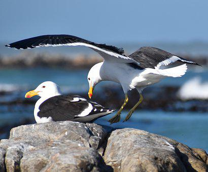 Sea, Bird, Seagull, Flying