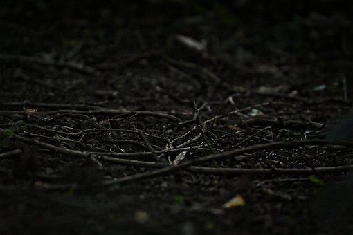 Forest, Forest Floor, Night, Dark, Weird, Creepy