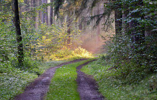 Forest Path, Nature, Sun Rays, Atmosphere, Forest, Vote