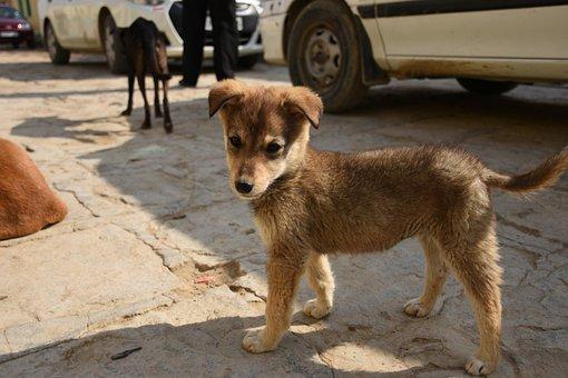 Puppy, Dog, Breed, Animal, Cute, Happy