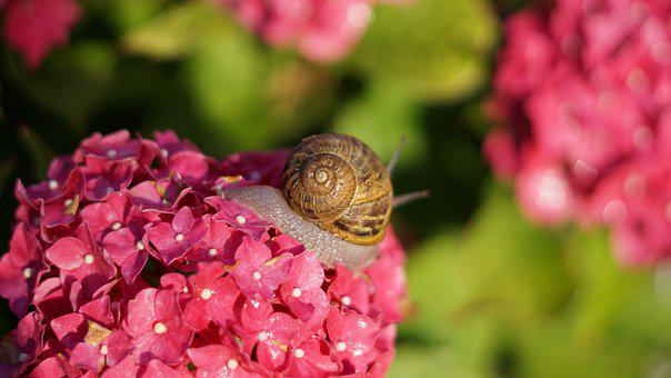 Snail, Shell, Mollusk, Animal Portrait, Crawl, Casing