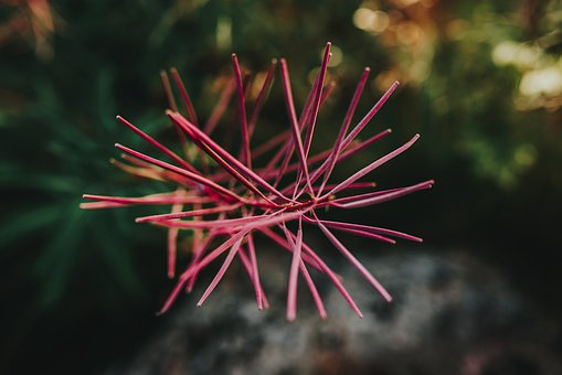 Spike, Spiky, Nature, Plant, Thorns, Prickly, Flora