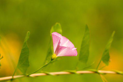 Winds, Flower, Bloom, Pink, Green, Plant, Nature