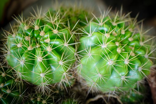 Plant, Spikes, Thorns, Spiky, Needle