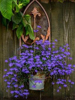 Summer, Evening, Garden, Flowers, Pot, Arch, Gothic