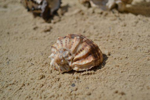 Seashell, Summer, Vacation, Sea, Sand, Beach