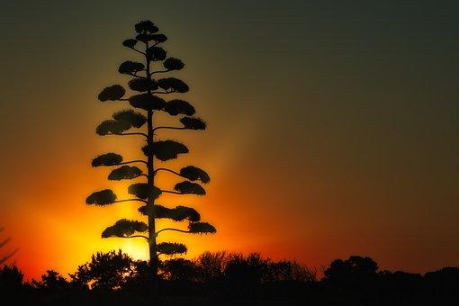 Sunrise, Tree, Nature, Sky, Sunlight, Light, Mood