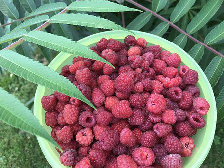 Garden, Fruit, Summer, Vitamins, Red, Harvest