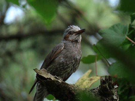 Animal, Forest, Green, Wood, Bird, Wild Birds