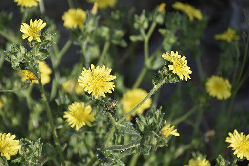 Flower, Wild Flowers, Flower Color Yellow