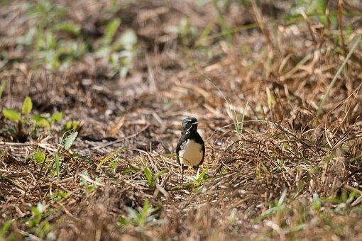 Bird, Nature, Animal, Wildlife, Wild, Outdoors, Fauna