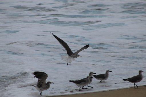 Ave, Birds, Beach, Plumage, Flying, Flight, Summer