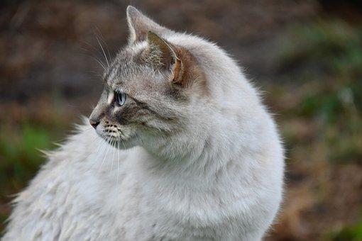 Cat, Alley Cat, European Cat, Animal, Feline