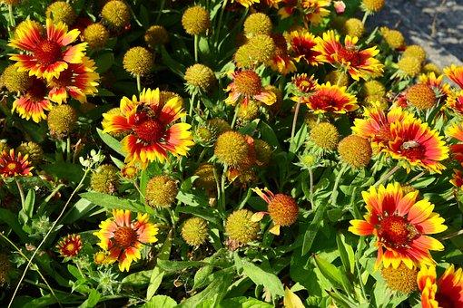 Flowers, Yellow Red, Bright, Flora, Garden, Romantic