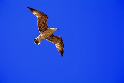 Seagull, Freedom, Sky, Nature, Bird, Flight, Ala, Fly
