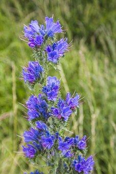 Flower, Nature, Summer, Garden, Blossom, Bloom, Beauty