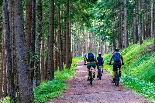 Forest, Forest Road, Mountain Bike, E-bike, E-mtb