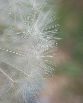 Macro, Flower, Chicory, Detail, Plant, Nature