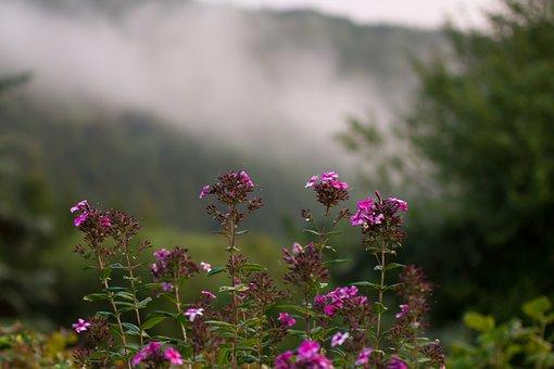 Fog, Flower, Nature, Grass, Landscape, Forest, Spring