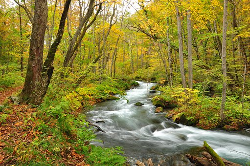River, October, Autumn, Yellow, Scenic, Fall, Season