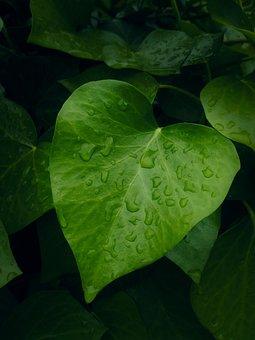 Leaf, Heart, Contrast, Green, Plant, Garden, Nature