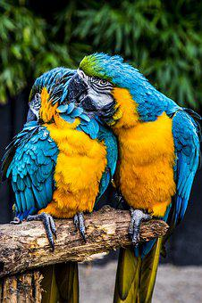 Parrot, Ara, Bird, Plumage, Colorful, Color, Exotic