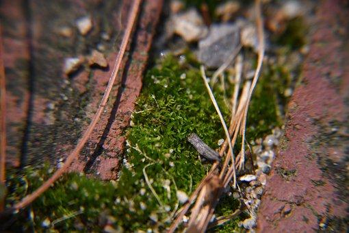 Macro, Sand, Moss, Green, Seashell, Colorful